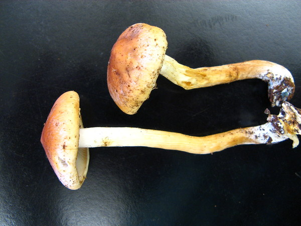 Magic mushrooms could replace antidepressants within five years