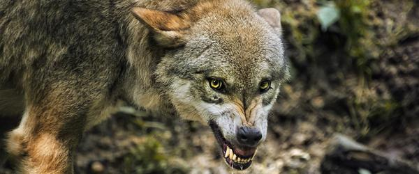 The Wolf Is Guarding the Hen House: The Government's War on Cyberterrorism