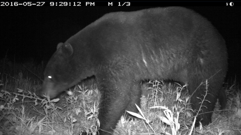 Bear Shot After Breaking Into North Carolina Home – Defensive Gun Use of the Day