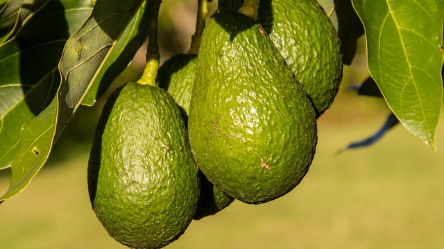 Avocados recalled in six states