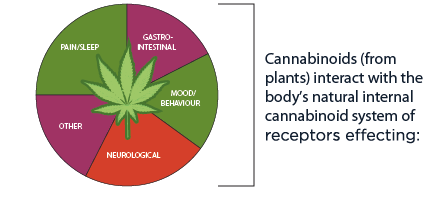 Economic Impact of Biosynthesis on the Cannabis Industry