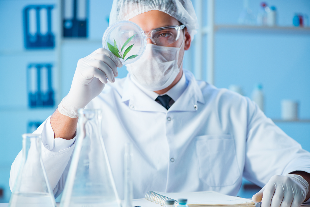 Biotech M&A Momentum Attractive for Cannabinoid R&D Space