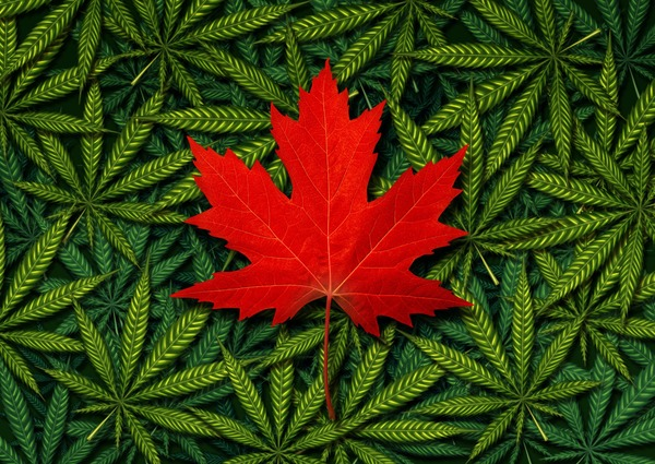 How Canada's Top Cannabis Companies Are Gearing Up For Recreational Cannabis Legalization