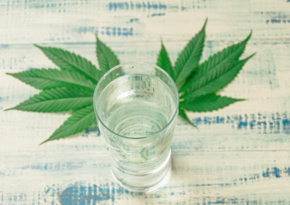 Cannabidiol-Infused Water Company Sees Market Going 'Mainstream'