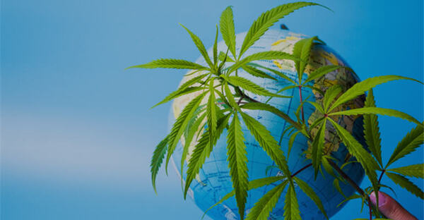 Strong Growth Projected For Global Medicinal Cannabis Market