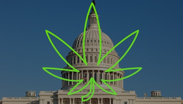 Mitch's Mess: How Mitch McConnell Has Created Chaos in Cannabis Law Enforcement