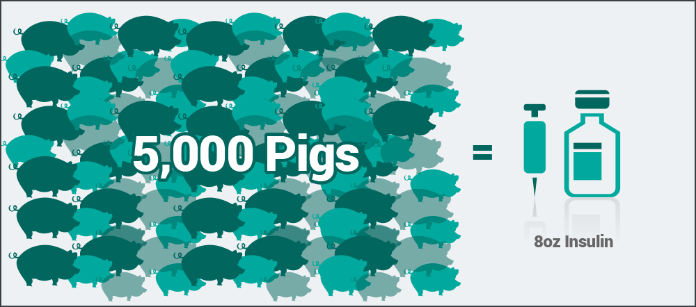 5000-pigs-mobile