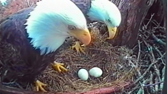 Woman to PragerU: Preborn eagles are people… but preborn humans aren't