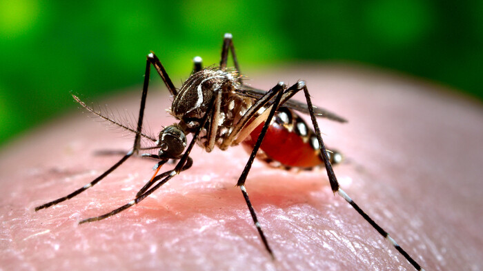 Florida OKs release of genetically modified mosquitoes in Keys to slow insect disease spread